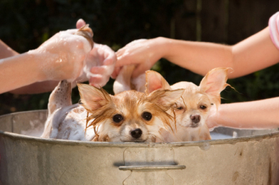 Skin care to Canines
