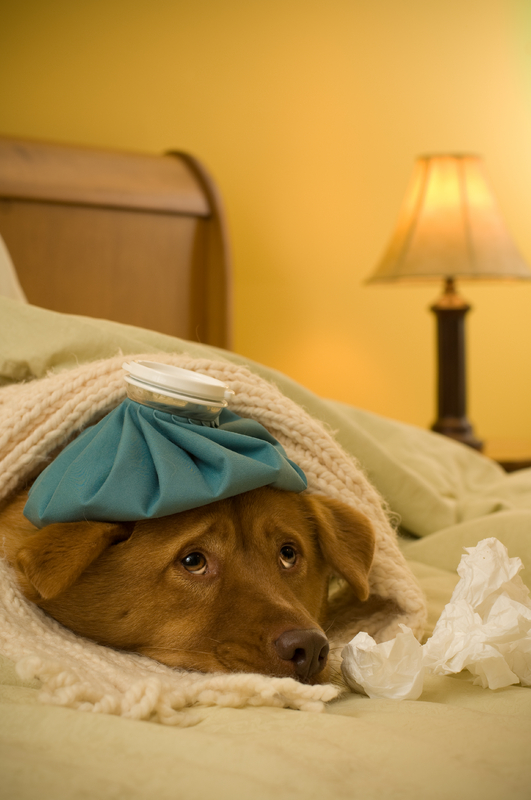 http://doggies.com/blog/wp-content/uploads/2008/07/sick-dog.jpg
