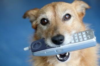dogs can be trained to call 911