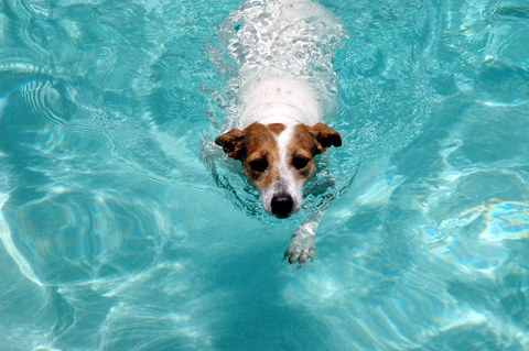 http://doggies.com/blog/wp-content/uploads/2008/10/swimming.jpg