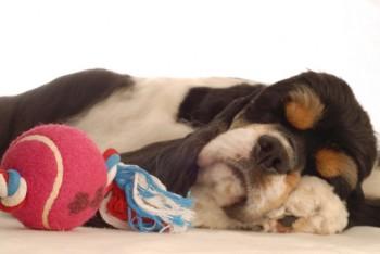 sleepy-toy