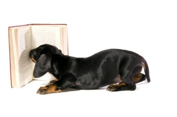 doxie-book
