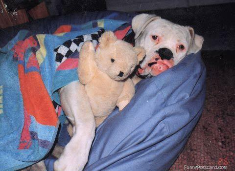 Tuesday's Top Ten: Reasons Why God Made Dogs : Doggies.com Dog Blog