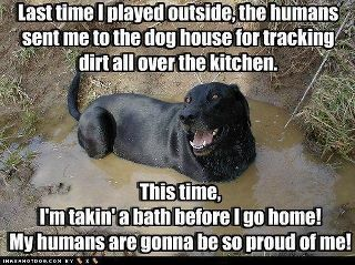 Image result for funny friday pet images