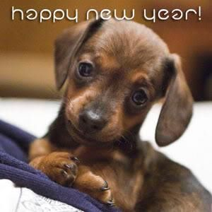 happy new year from puppy