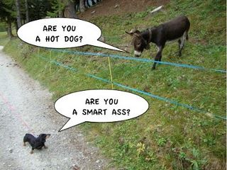 Friday Funny And Then The Dachshund Said To The Donkey Doggies Com Dog Blog