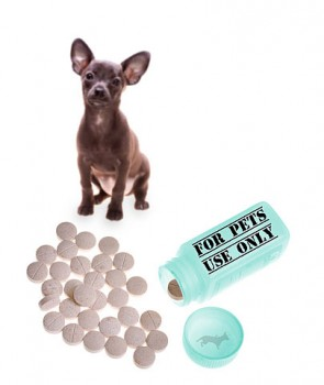 Chihuahua and bottle of pills pet prescription