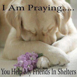 Puppies on Of View Read More Tagged Adoptable Dogs Praying Dogs Shelter Dogs
