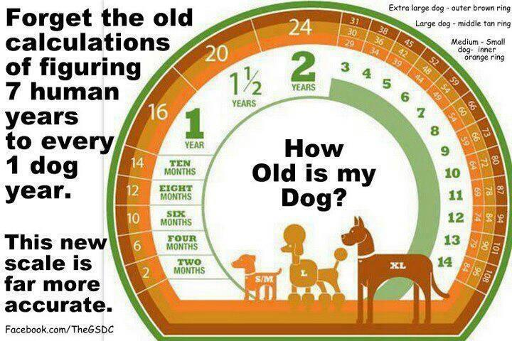 Dog Years Compared To Human Years Chart