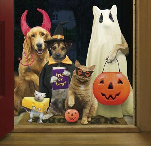 Image result for halloween dogs and cats