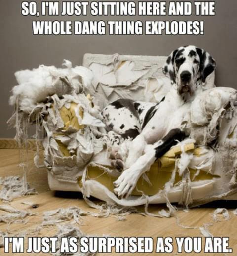 Friday Funny: Exploding Couch : Doggies.com Dog Blog