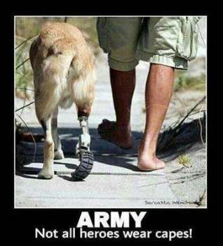 Army hero dog