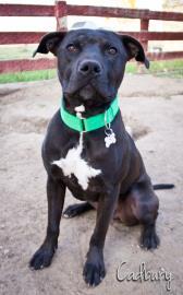Black Dog Animal Rescue In Cheyenne Wy