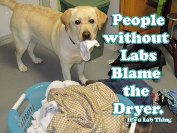 Dryer monster