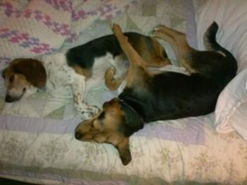 Penny Daisy nap