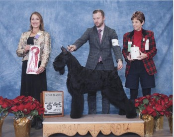 Tuesday Top Ten Dogs To Watch At Westminster 2014