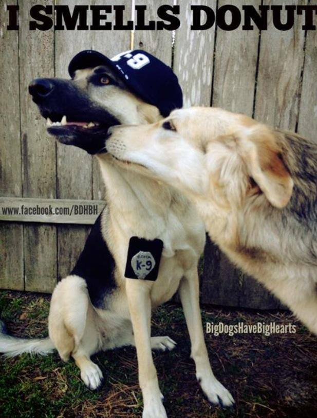Friday Funny Just Lick Off The Powdered Sugar Doggies